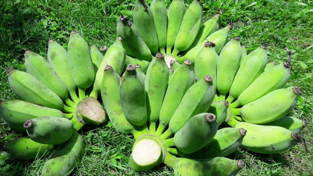 ประโยชน์ของ กล้วยน้ำว้า