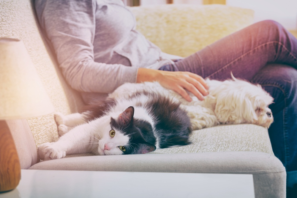 การเสริมสุขภาพจิต-การเลี้ยงสัตว์