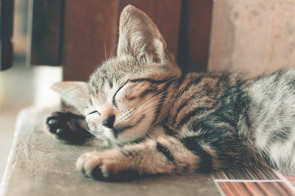 อาการนอนไม่หลับ-ห่างจากสัตว์เลี้ยงและมือถือ