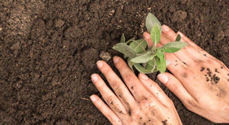 ปลูกต้นไม้ เปลี่ยนพฤติกรรมการใช้ชีวิต 2